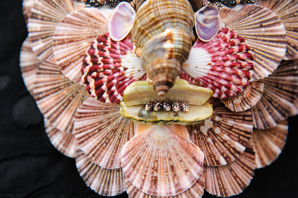Seashell Mask After Archimbaldo On Antique Row West
